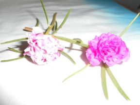 """""""These are two tiny and beautiful flowers that grow simply, this flower reminds me always of my two little young daughters of mine."""" Arania.3"""